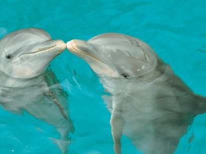 Dolphin Discovery St. Kitts Basseterre  Saint Kitts and Nevis