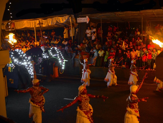 The Tuskers and Performers of the Esala Perahera