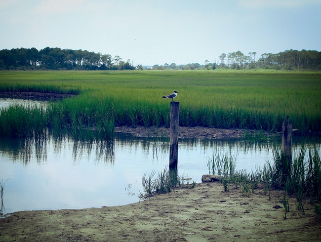 Eastern Shore Marsh