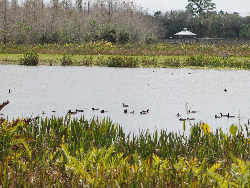Birdwatching at Green Cay Wetlands Boynton Beach Florida United States
