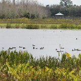 Green Cay Nature Center & Wetlands