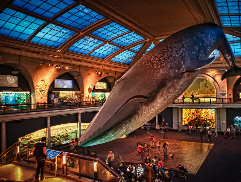 New York Must See: American Museum of Natural History