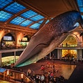 American Museum of Natural History New York New York United States