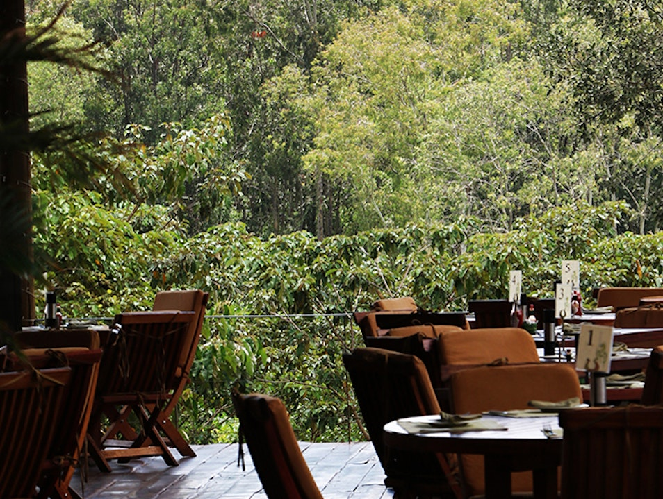 Brunch in the forest at the River Café