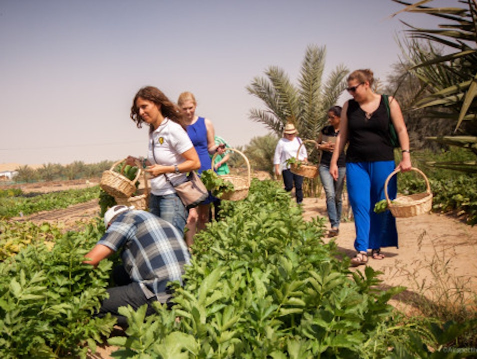 Visit the Greenheart Organic Farms Dubai  United Arab Emirates