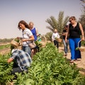 Greenheart Organic Farms Dubai  United Arab Emirates