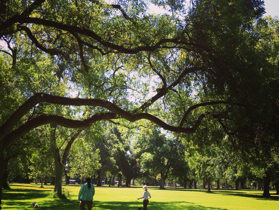 Relax Under Sacramento's Trees Sacramento California United States