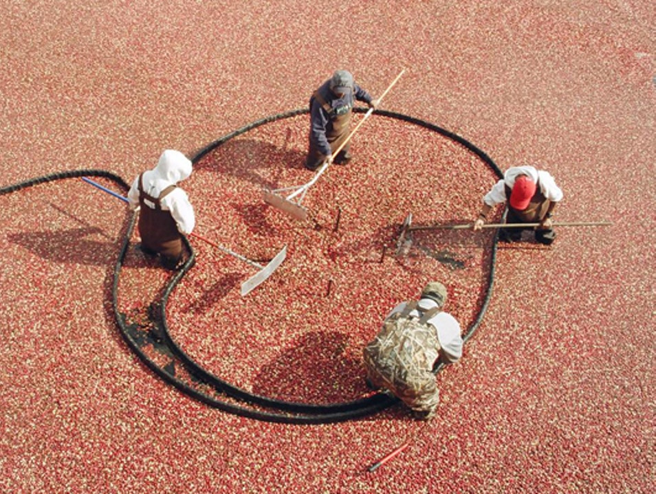 Cranberry Harvest Celebration: A New Way to See Fall Foliage