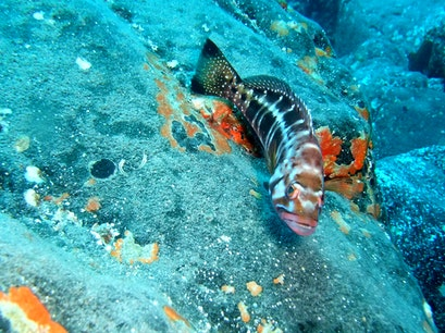 Los Gigantes Diving Centre Santiago del Teide  Spain