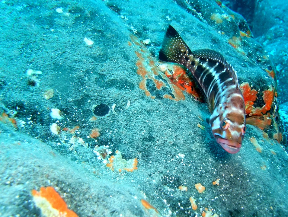 Discovering The Joys of Scuba Diving