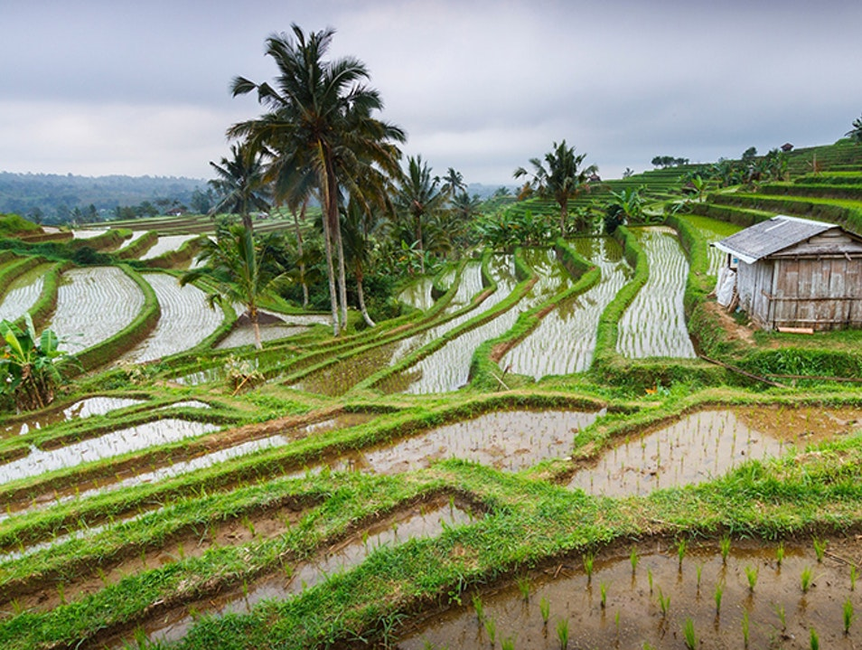 Bali's Iconic Rice Terraces Penebel  Indonesia