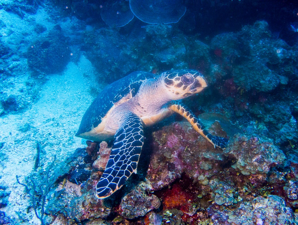 For Turtles with Secrets Belize  Belize