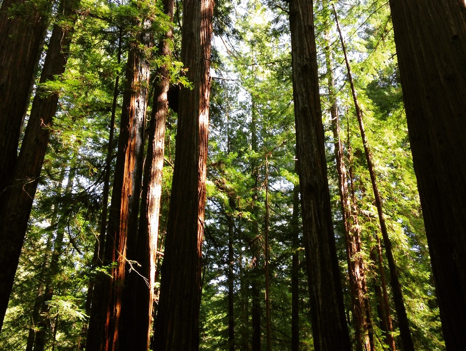 Realizing scale among the Redwoods  Guerneville California United States