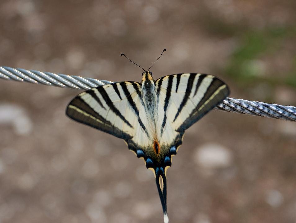 A butterfly on the Acropolis