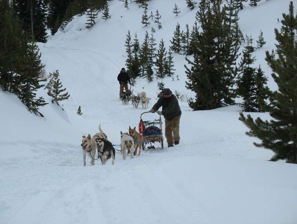 Dogsledding near Yellowstone