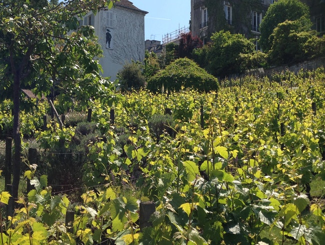 Clos Montmartre, the oldest vineyard in Paris