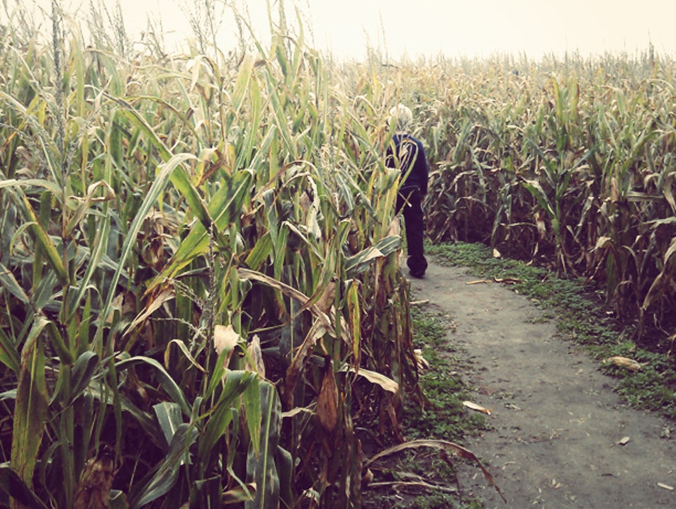 Children of the corn Lafayette Indiana United States