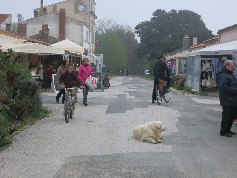 A dog lying in the middle of the street?? Île-d'Aix  France