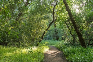 Bothe–Napa Valley State Park