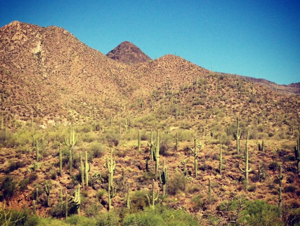 Solitude in the Desert Cave Creek Arizona United States