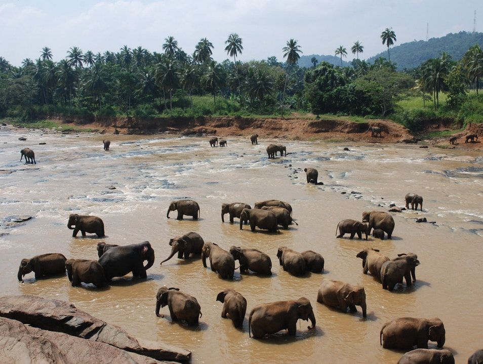 Pinnawala Elephant Orphanage Pinnawala  Sri Lanka