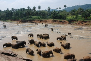Pinnawala Elephant Orphanage