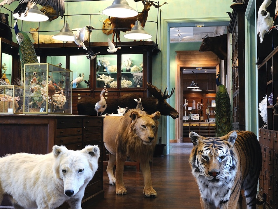 For All Your Taxidermy Needs Paris  France
