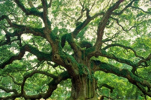 Angel Oak Park