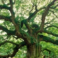 Angel Oak Park Charleston South Carolina United States