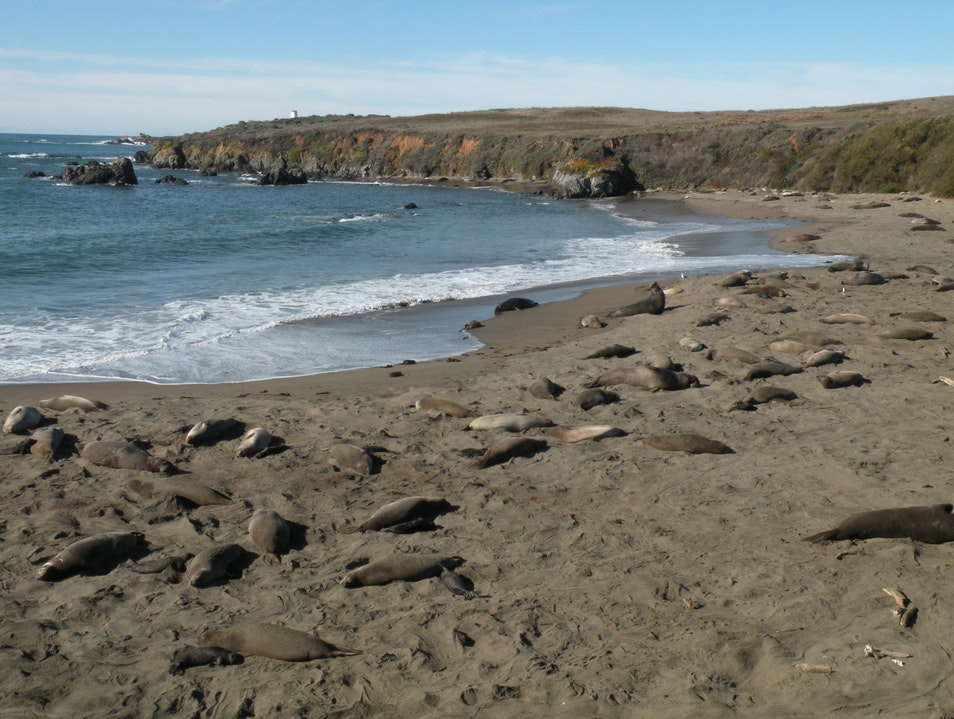 Avoid the tourist crowds to enjoy elephant seal viewing along this short hike off hwy 1 in California San Simeon California United States