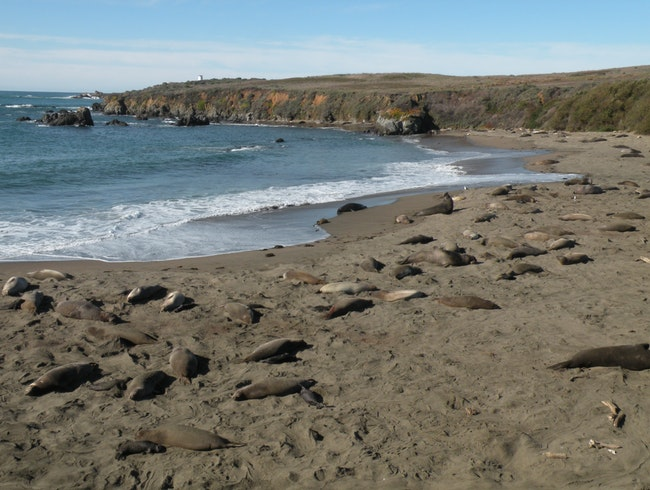 Avoid the tourist crowds to enjoy elephant seal viewing along this short hike off hwy 1 in California