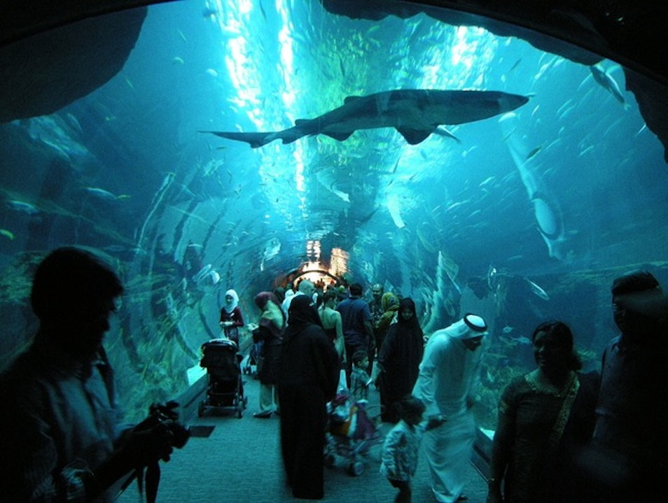 Shop, Swim with Sharks, Shop Some More: Dubai Mall Aquarium Dubai  United Arab Emirates