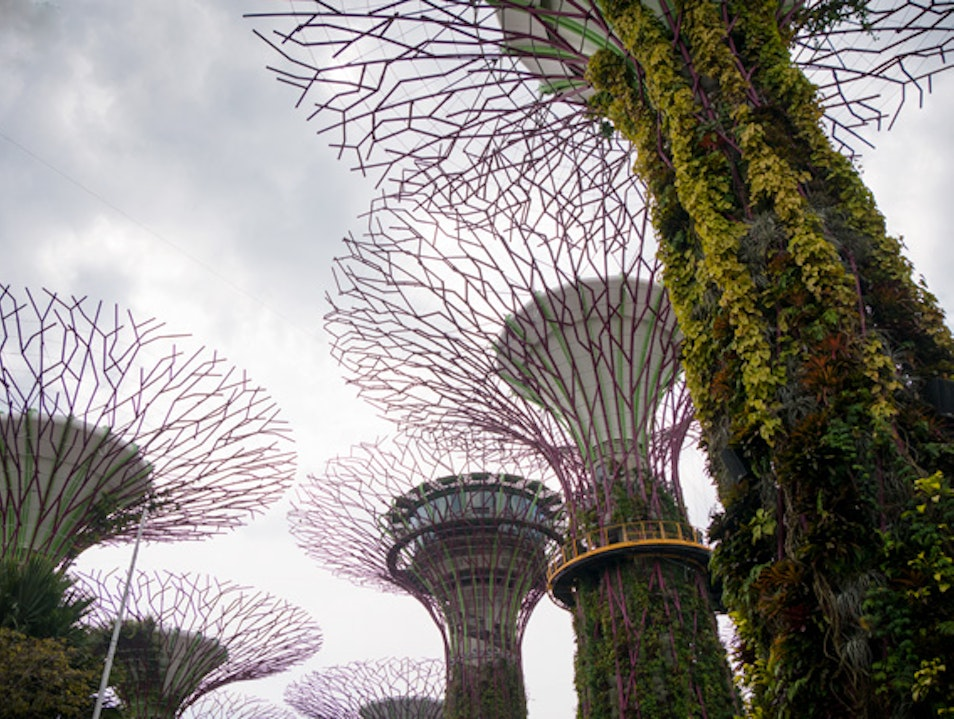 Engineering Wonder: Supertree Grove Singapore  Singapore