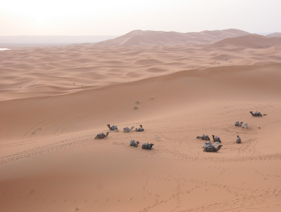 Our waiting camels in the desert sea.