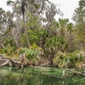 Blue Spring State Park Orange City Florida United States