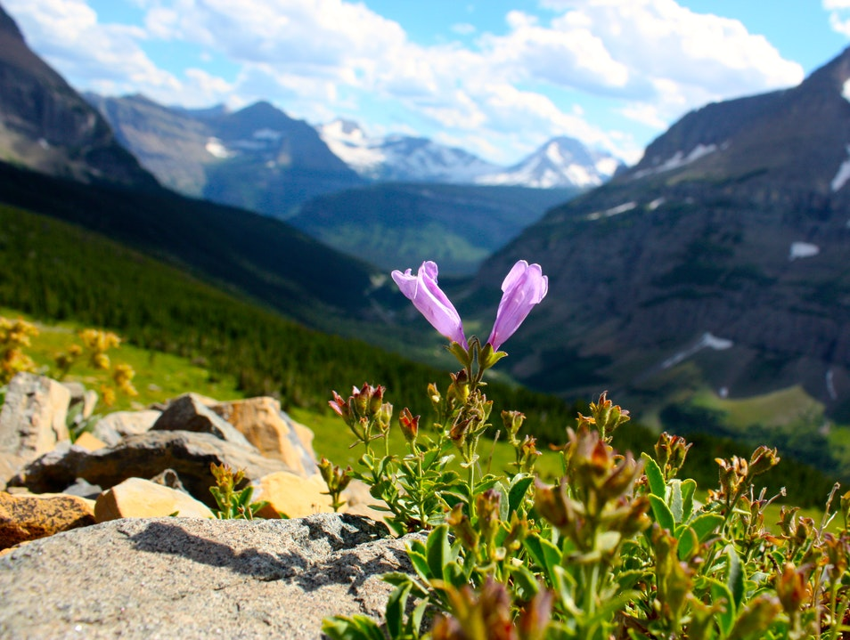 Hiking in Glacier National Park WEST GLACIER Montana United States
