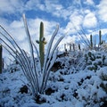 Saguaro National Park, AZ Tucson Arizona United States