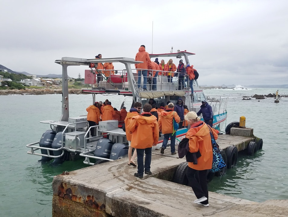 Shark Cage Diving in South Africa Gansbaai  South Africa