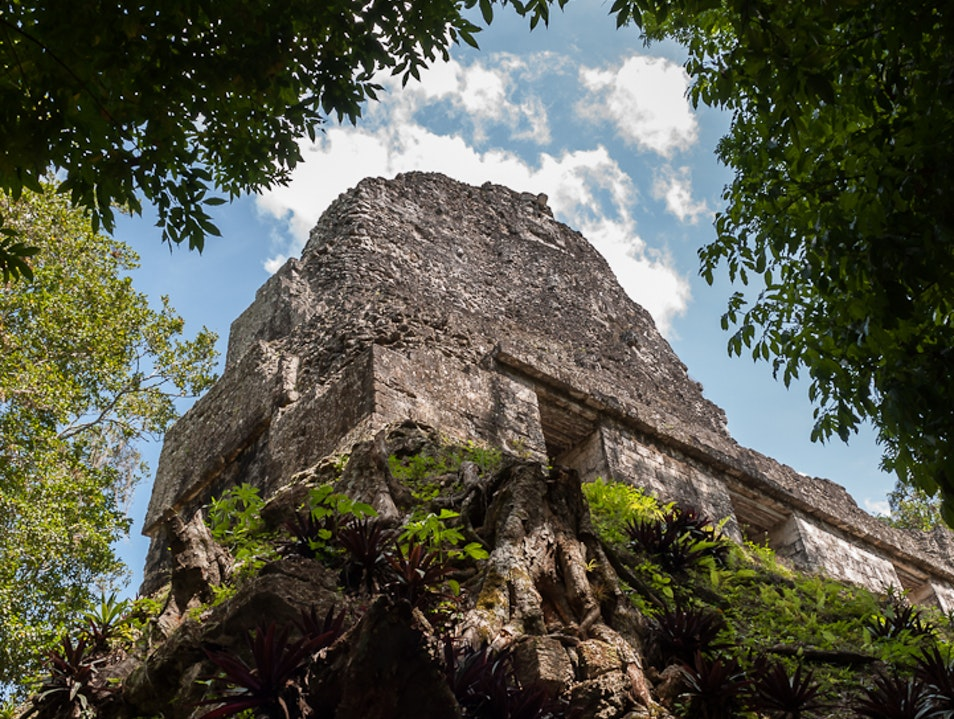 Monkeys, toucans and pyramids