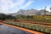 Garden, farm hotel, farm to table, luxury, South Africa, views, cuisine