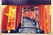 The Orange Torii of Fushimi Inari