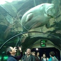 Sea Life Aquarium Sydney  Australia