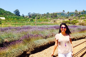 Keys Creek Lavender Field