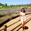 Keys Creek Lavender Field Valley Center California United States