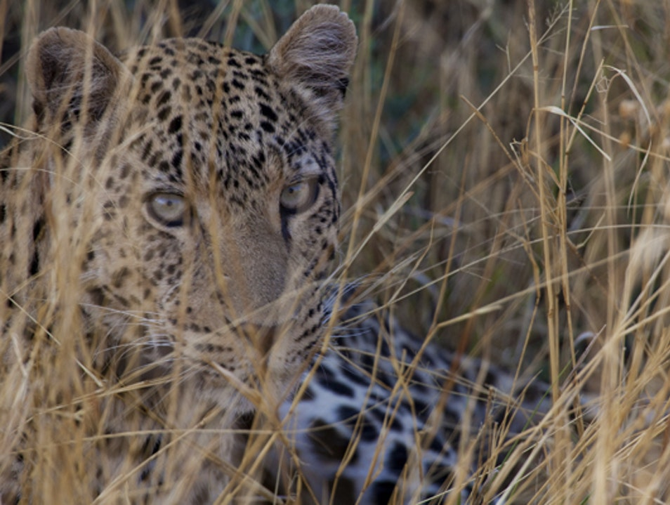 Luxe Namibia & Conservation of the Big Cats