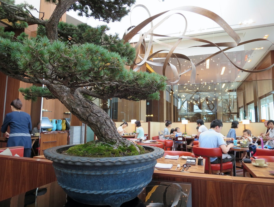 Breakfast among the bonsai Tokyo  Japan