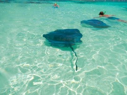 Stingray City Antigua Saint Philip  Antigua and Barbuda