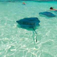 Stingray City Antigua