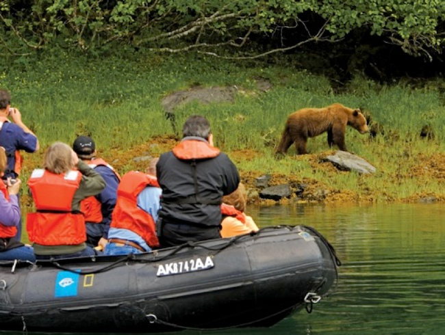 Prime Time for Alaskan Bear Viewing
