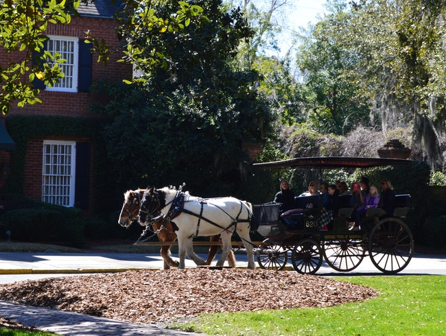 A carriage ride around the jewel of the south
